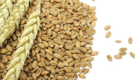 Cereali: integrali è meglio!