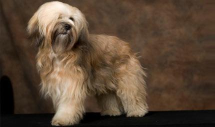 Insubria Winner 2011: la sfilata canina internazionale