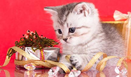 Il Natale di micio e fido