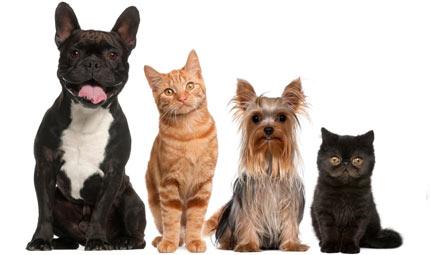 Nomi di cani e gatti famosi