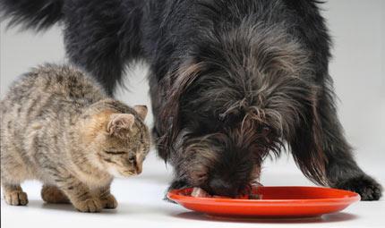 Nutripet: conoscerli bene, nutrirli meglio
