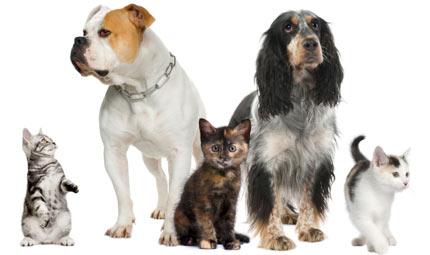 L'oroscopo 2012 per gli animali