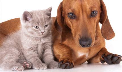 Parassiti intestinali nel cane e nel gatto