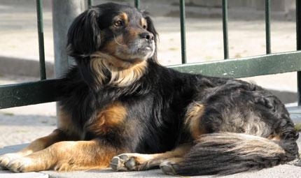 L'Italia e la tutela dei diritti degli animali
