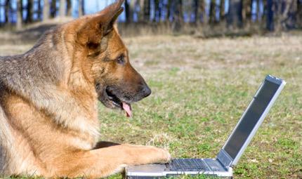 Anche i pet sono connessi ad un Social... Petwork