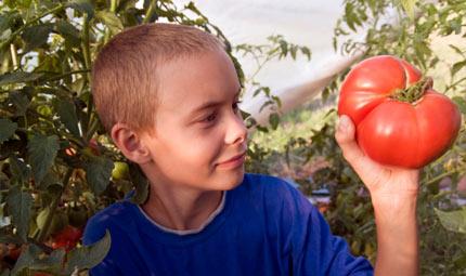 Pomodoro, d'estate amico dei piccoli