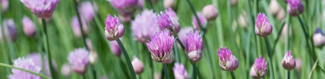 Enciclopedia delle piante e delle erbe medicinali