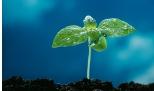 10 piante per il nostro benessere